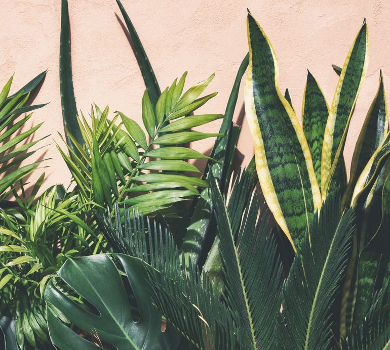 8 Plantas que ajudam a purificar o ar