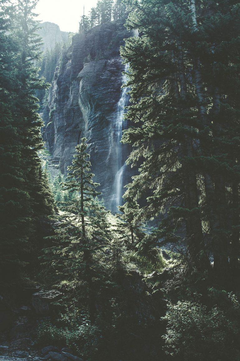 Que tal um banho de floresta?